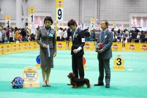 ジャパンインターナショナルドッグショー2012、アクセルBOB!